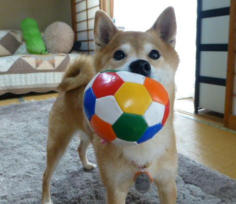 ボールとコロちゃん