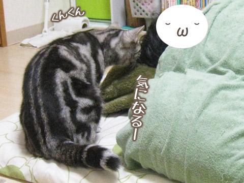 20131224ゆめ04