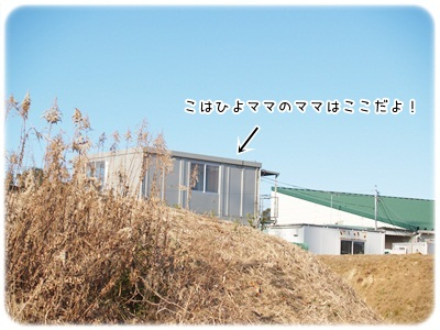 P1104189.jpg