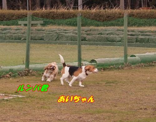 P1138800.jpg