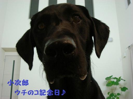 12.8.20小次郎記念日