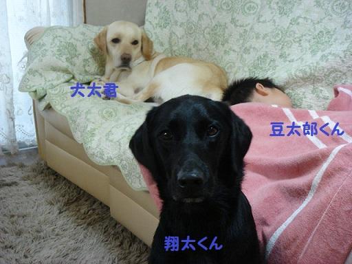 12.9.16犬太家