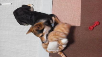 ぴよこ猫と2