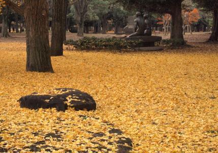 1129_代々木公園_1