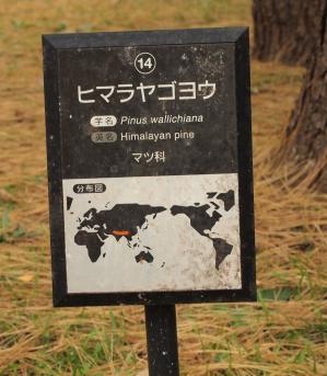 1129_代々木公園_5