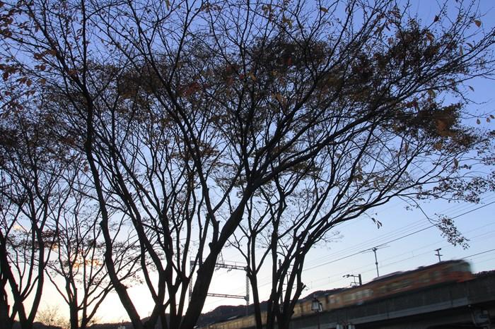 13.11.26 木枯らし 唐崎駅前 17-35f2.8L