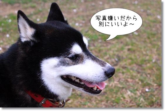10_20130326032131.jpg
