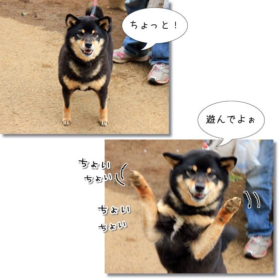 11_20130418151116.jpg