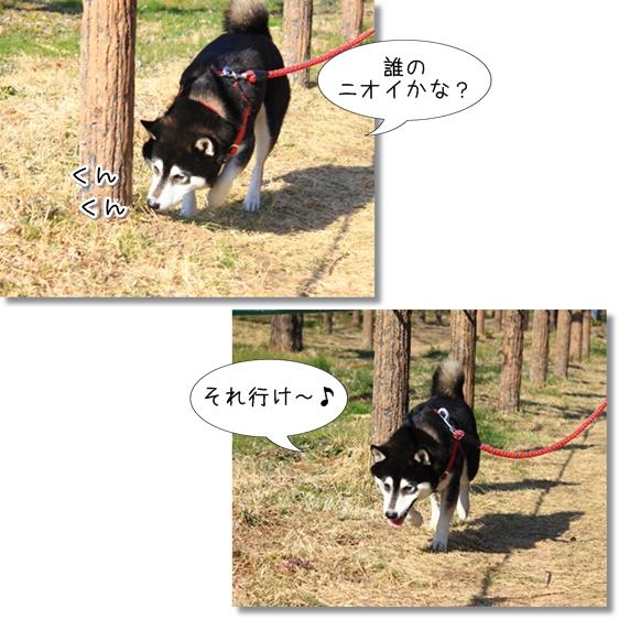 5_20130324151759.jpg