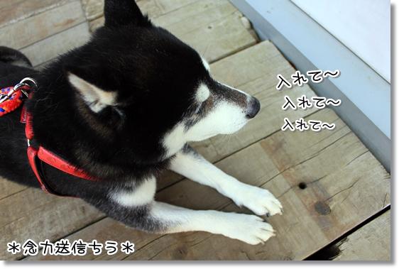 8_20130322143259.jpg