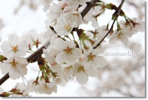 9_20130326032131.jpg