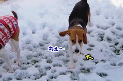 大雪 10