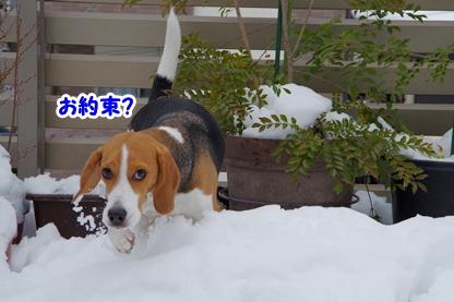 雪像 12