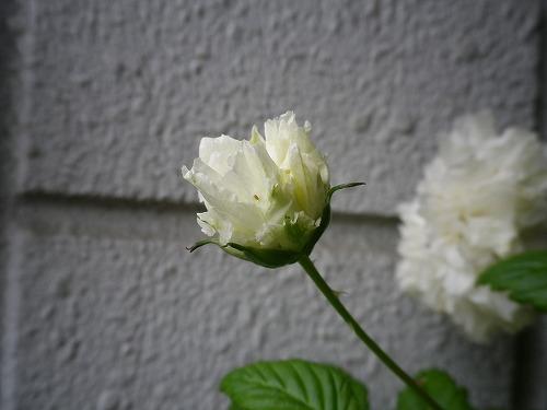 IMGP9650.jpg