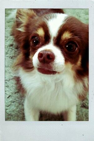 fc2blog_20120514173739ca0.jpg