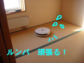 DSC04573.jpg