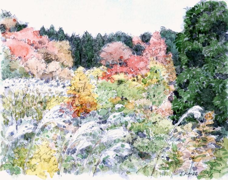 秋の山高槻 (750x592)