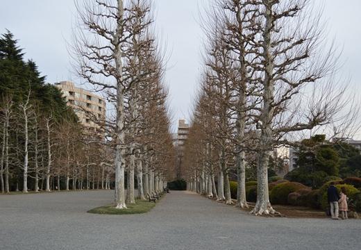 内藤新宿 20130106 (227)_R