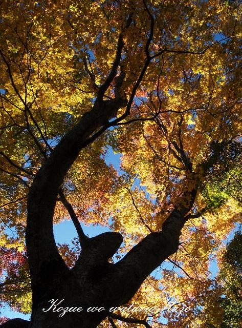 秋の情景7