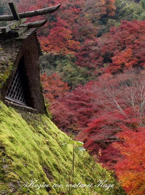 秋の情景8