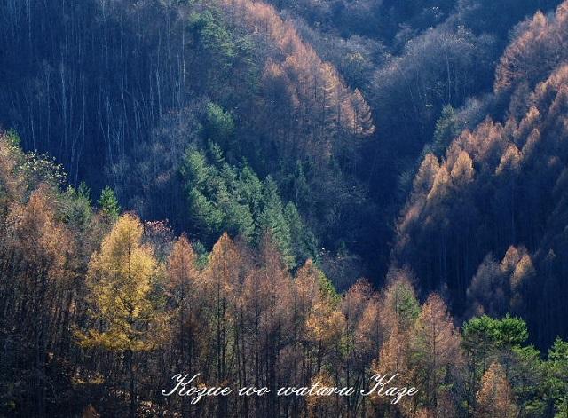 秋の情景1