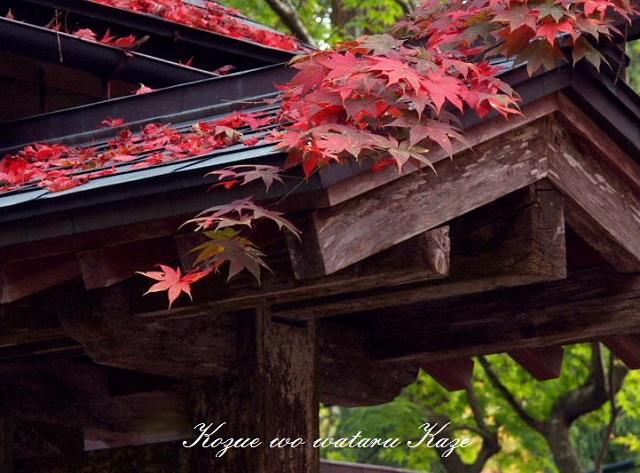 秋の情景2