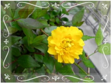 花ブ201255-2