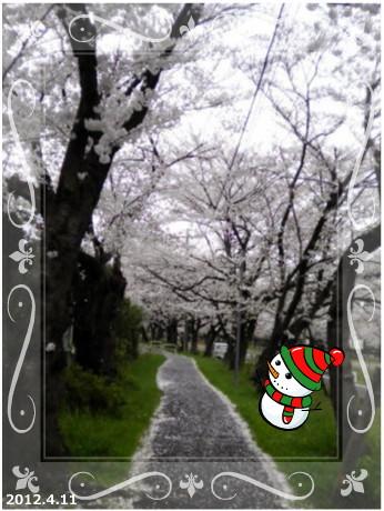 花ブ2012515-3