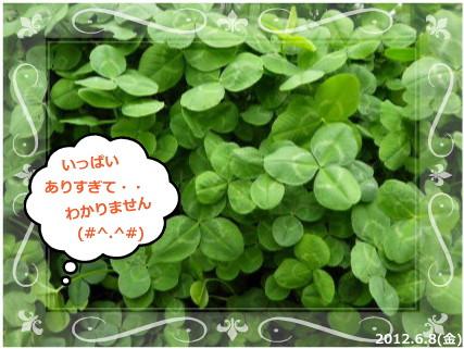 花ブ201269-2