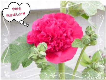 花ブ201269-5