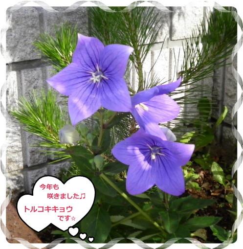 花ブ2012627-7