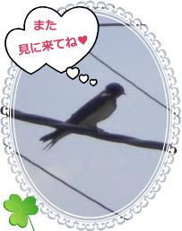 花ブ2012711-6