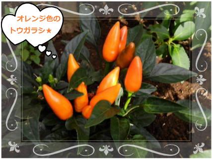 花ブ2012815-2