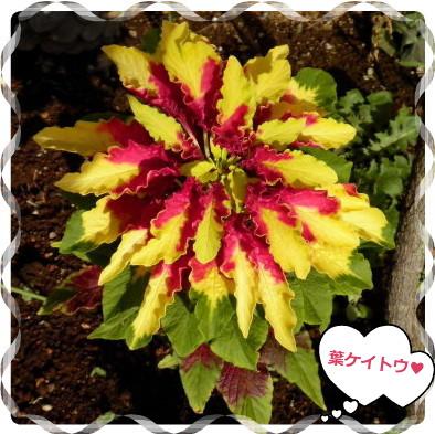 花ブ2012815-7