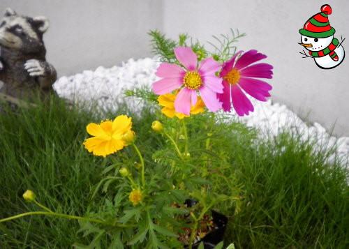 花ブ2012920-5
