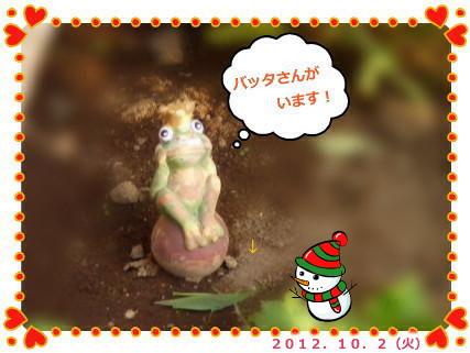 花ブ2012104ー5