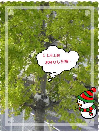 花ブ20131211-1
