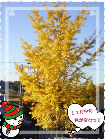 花ブ20131211-2