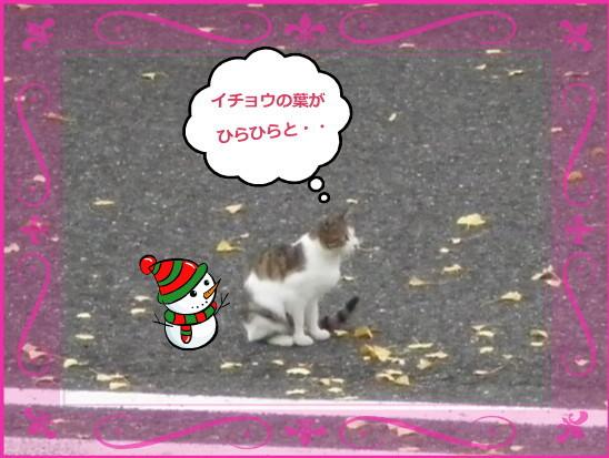 花ブ20131211-4
