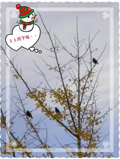 花ブ20131211-5