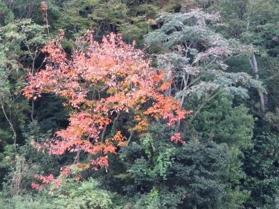 上荻野・松石寺近くの紅葉