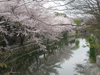20100411花見三井寺 1