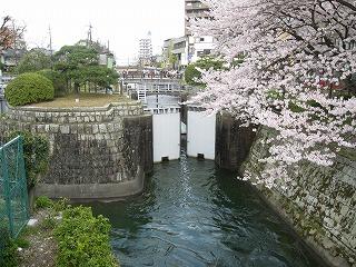 2010花見山科 10
