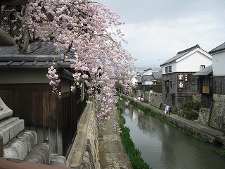 20100411花見三井寺 2