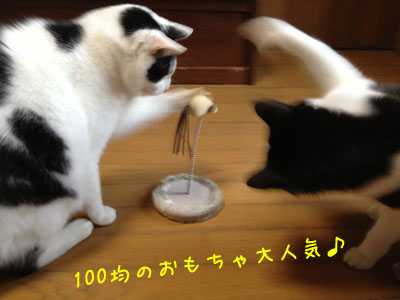 100kin1.jpg