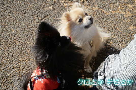 535px20141220_FUGA Candy-01