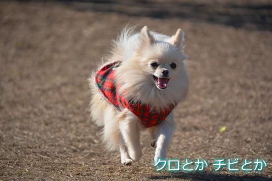 535px20141211_MiTo-02.jpg