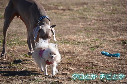 535px20141215_MiTo-006.jpg