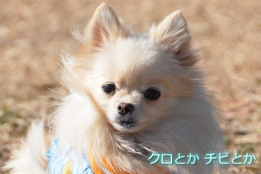 535px20141223_MiTo-02.jpg