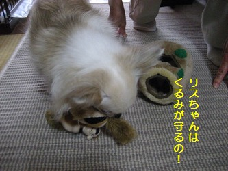 リスのおもちゃ4